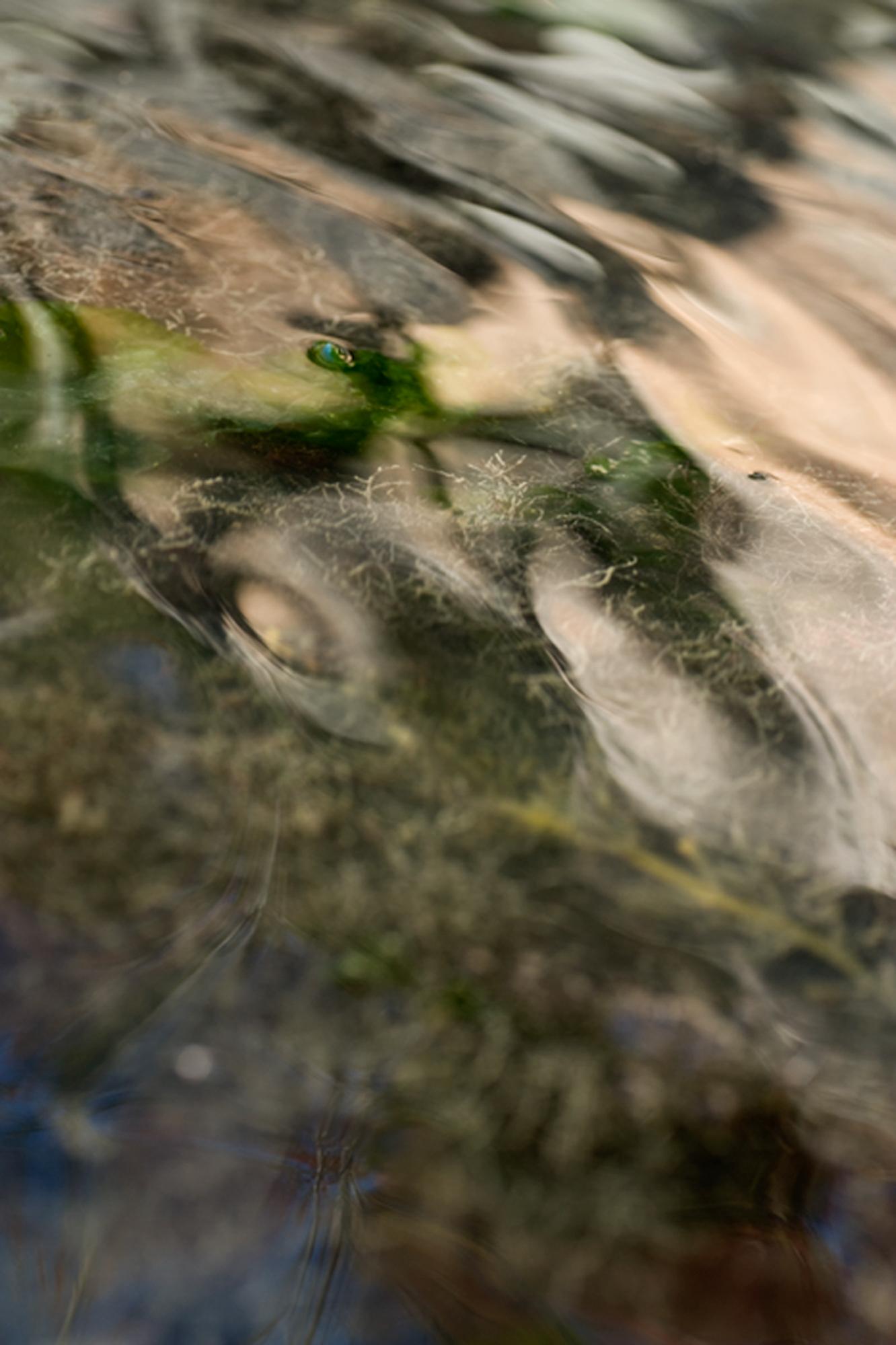 Shimmering Shoal, 2011 (Touching the Farm River)