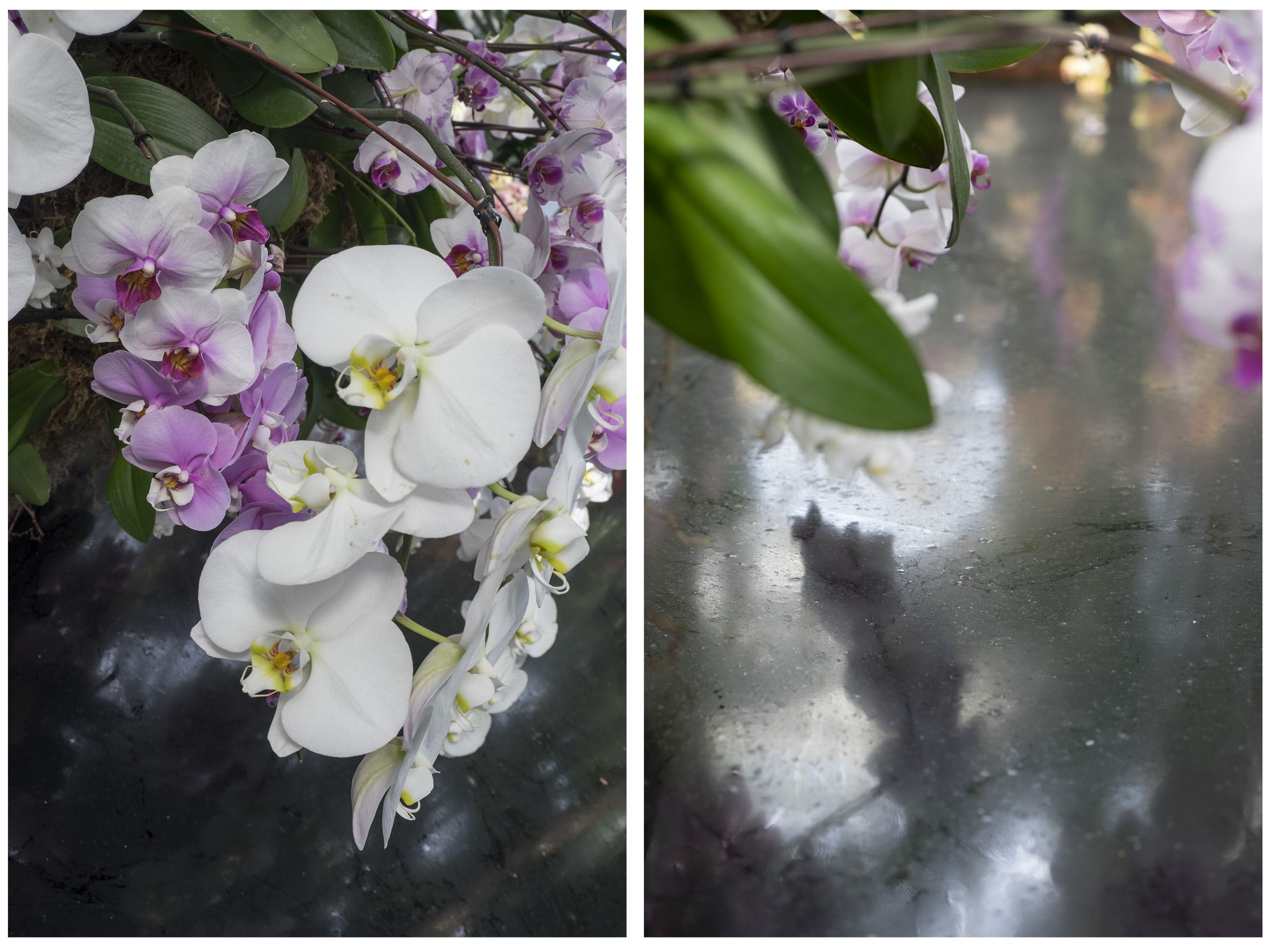 Orchid I, 2015 (Binary Rivalry)