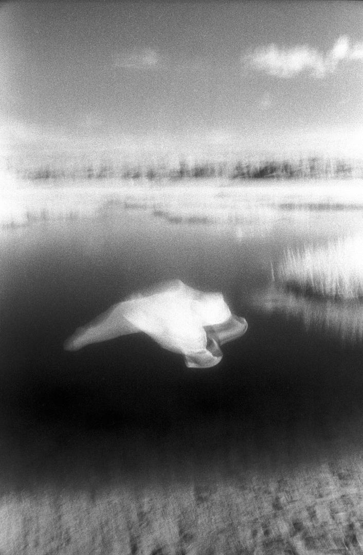 Lapse 2000 2001 Slippages Wetlands